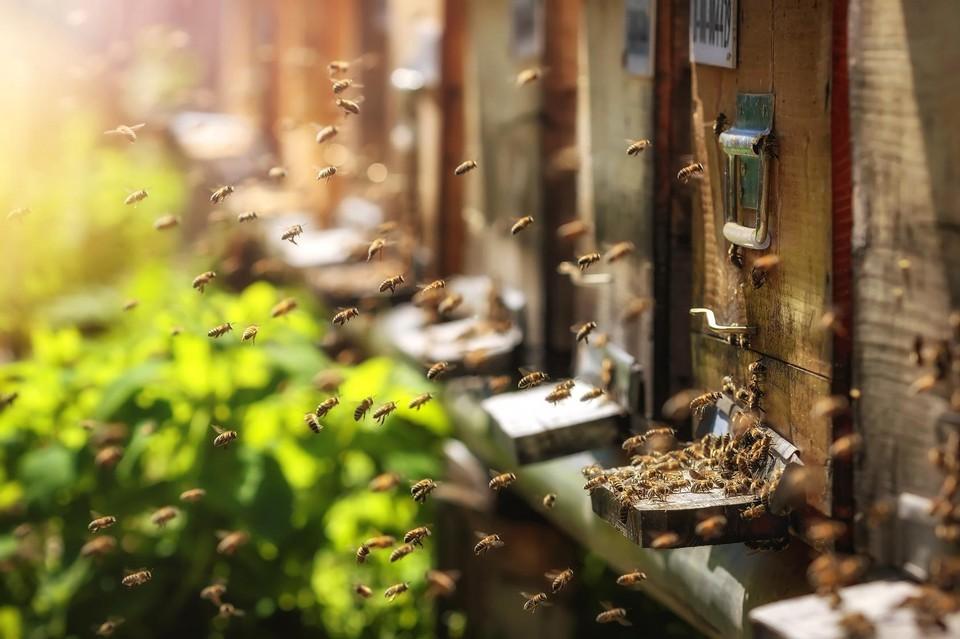 Bienen Partner bienen patenschaft it partner für server services it security
