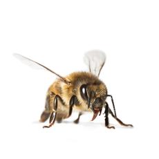 Bienen Partner nachhaltigkeit it partner für server services it security